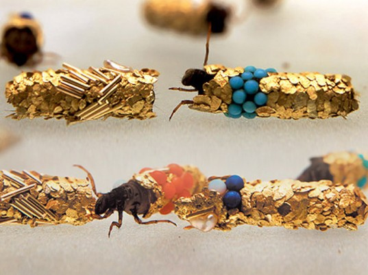 Insect-created jewellery by Hubert Duprat